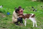 DaronsDaronnes.com_travelwithkids_Azores_SaoMiguel_farm_030