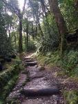 DaronsDaronnes.com_travelwithkids_Azores_SaoMiguel_hike_055